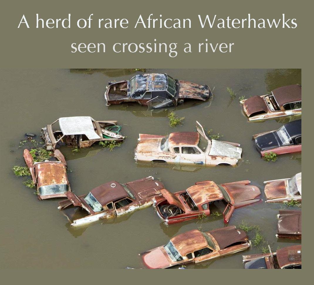 Waterhawks